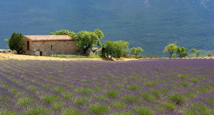 mas in provence